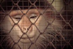 Schreiender Affe hinter dem Käfig Stockfotografie