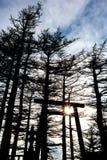 Schrein (Josshaus) und Sonnenuntergang in Japan (Schattenbild) Stockbilder