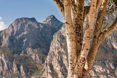 Schriftlicher Baum Lizenzfreie Stockbilder