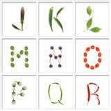 Schrifttypen vom Gemüse stockfoto