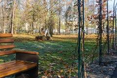 Schrijvers` s Park Irpin ukraine Royalty-vrije Stock Afbeelding