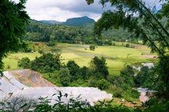 Schritt ricefield in Chiang Mai Thailand Lizenzfreie Stockfotos