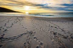 Schrittbahnen im Sand auf Strand mit Sonnenaufgang oder Sonnenuntergang Stockfoto