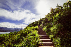 Schritte auf dem Berg unter den Anlagen auf dem Hintergrund des Wassers und der Berge Lizenzfreie Stockfotos