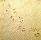 Schritte auf dem Design sand_1 Stockbild