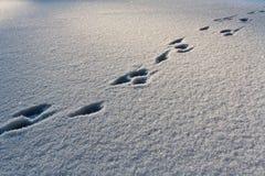 Schritte auf dem Schnee stockbild