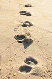Schritte auf einem sonnigen Strand Lizenzfreies Stockfoto