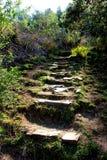 Schritte auf einem Weg in Hogsback-Region Stockfoto