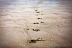 Schritte auf Sand Lizenzfreie Stockfotografie