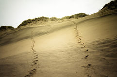 Schritte in den Dünen Lizenzfreie Stockbilder