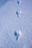 Schritte des wilden Tieres auf dem Schnee Stockbild