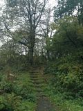 Schritte, die auf die Mitte des Holzes aufsteigen Stockbild