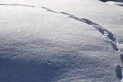 Schritte im großen Schnee lizenzfreie stockfotografie