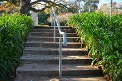 Schritte im Park Lizenzfreie Stockbilder