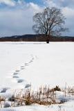 Schritte im Schnee stockfotografie