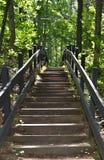 Schritte im Wald Lizenzfreie Stockfotos