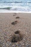 Schritte vom Ozean Stockfotografie
