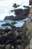 Schroffe Küste Stockbild