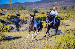 Schroffer Cowboy Stockfotografie