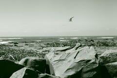 Schroffer Neuseeland-Strand Stockfotos