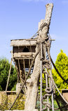 Schronienie dla południe - amerykański Coati Fotografia Royalty Free