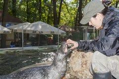 Schronienie foki szkolenie obrazy royalty free