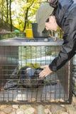 Schronienie foki szkolenie zdjęcia stock
