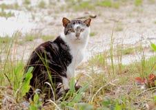 Schronienie kot Obraz Royalty Free