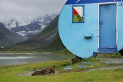 Schronienie w Altai górach, Lipiec 2016 Zdjęcie Royalty Free