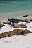schronienie wyrzucać na brzeg foki fotografia stock