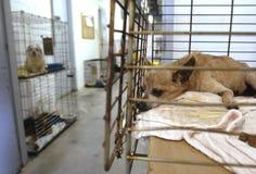 schronienie zwierzęcych Zdjęcia Stock