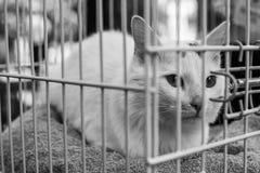 Schroniskowy kota portret Obrazy Stock