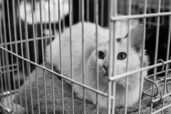 Schroniskowy kota portret Obraz Stock