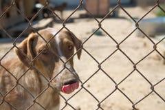 Schroniskowy pies Zdjęcie Stock