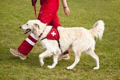 Schroniskowy pies Fotografia Royalty Free