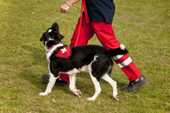Schroniskowy pies Zdjęcia Royalty Free