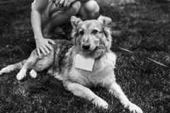 Schroniskowy psi portret Fotografia Stock