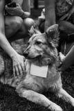 Schroniskowy psi portret Zdjęcie Stock