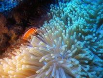 schroniskowy underwater Zdjęcia Stock