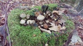 Schrooms in einem Baum Lizenzfreie Stockfotos