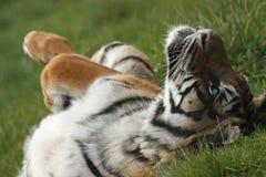 Schrulliger Tiger Stockbild