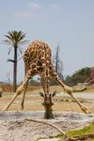 Schätzchen-Giraffe Stockfoto
