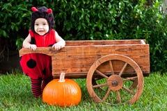 Schätzchen im Marienkäfer Halloween-Kostüm draußen Lizenzfreies Stockfoto