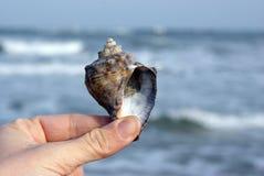 Schätzen der Zukunft in einem Seashell Stockbild