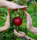 Schützen Sie den Apfel Stockbild