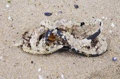 Schuh bedeckt mit Miesmuscheln auf Sand Lizenzfreie Stockfotos