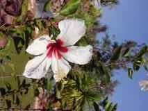 Schuh-Blume Stockbild