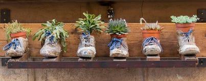 Schuh-Pflanzer stockfotos