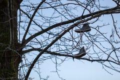 Schuhe im Baum Stockbild
