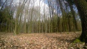 Schuif die van de bomen in het bos wordt geschoten stock videobeelden